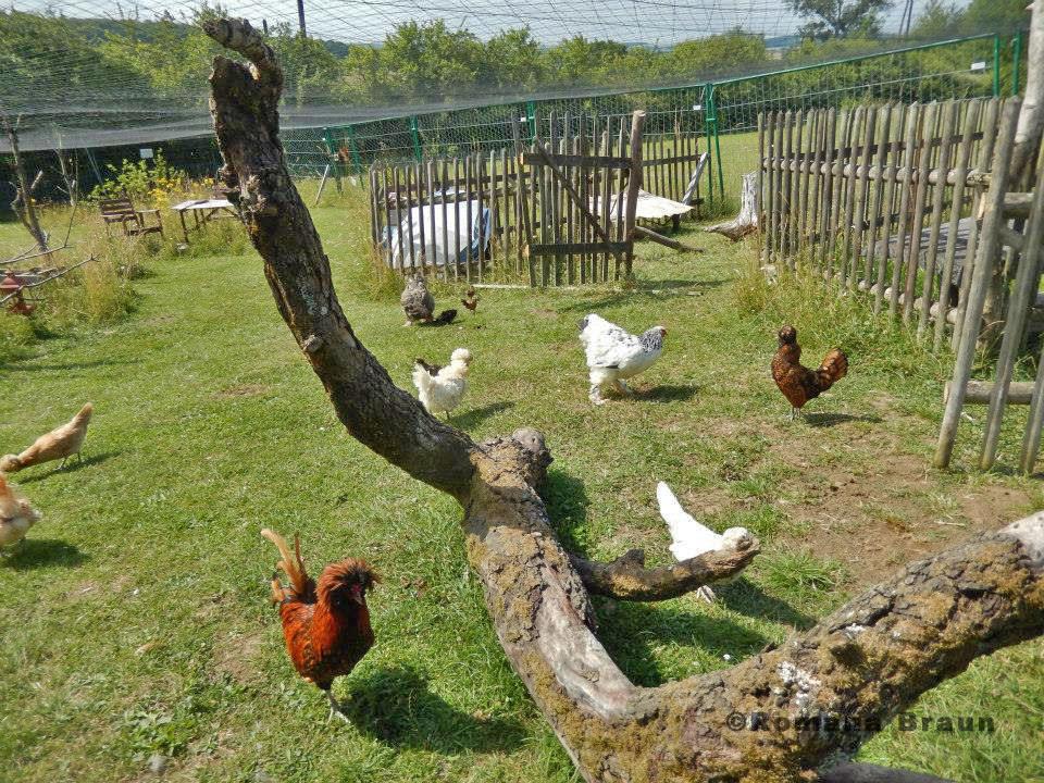 Hühnergehege außenvolieren im bild